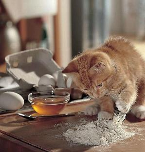 chaton cuisine
